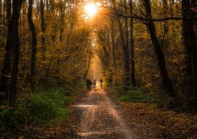 -Herbstspaziergang-