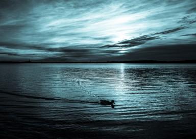 Ente bei Nacht