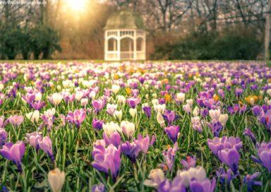 Frühling im Johannapark