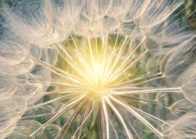 shining flower 2